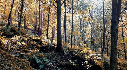 """""""La mia Terra"""". Concerto nel bosco degli artisti per sostenere il ..."""
