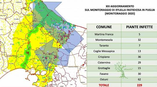 Mappa Xylella Puglia.Xylella Nelle Province Di Brindisi E Taranto Altri 229 Ulivi Infetti Ambiente Tgr Puglia