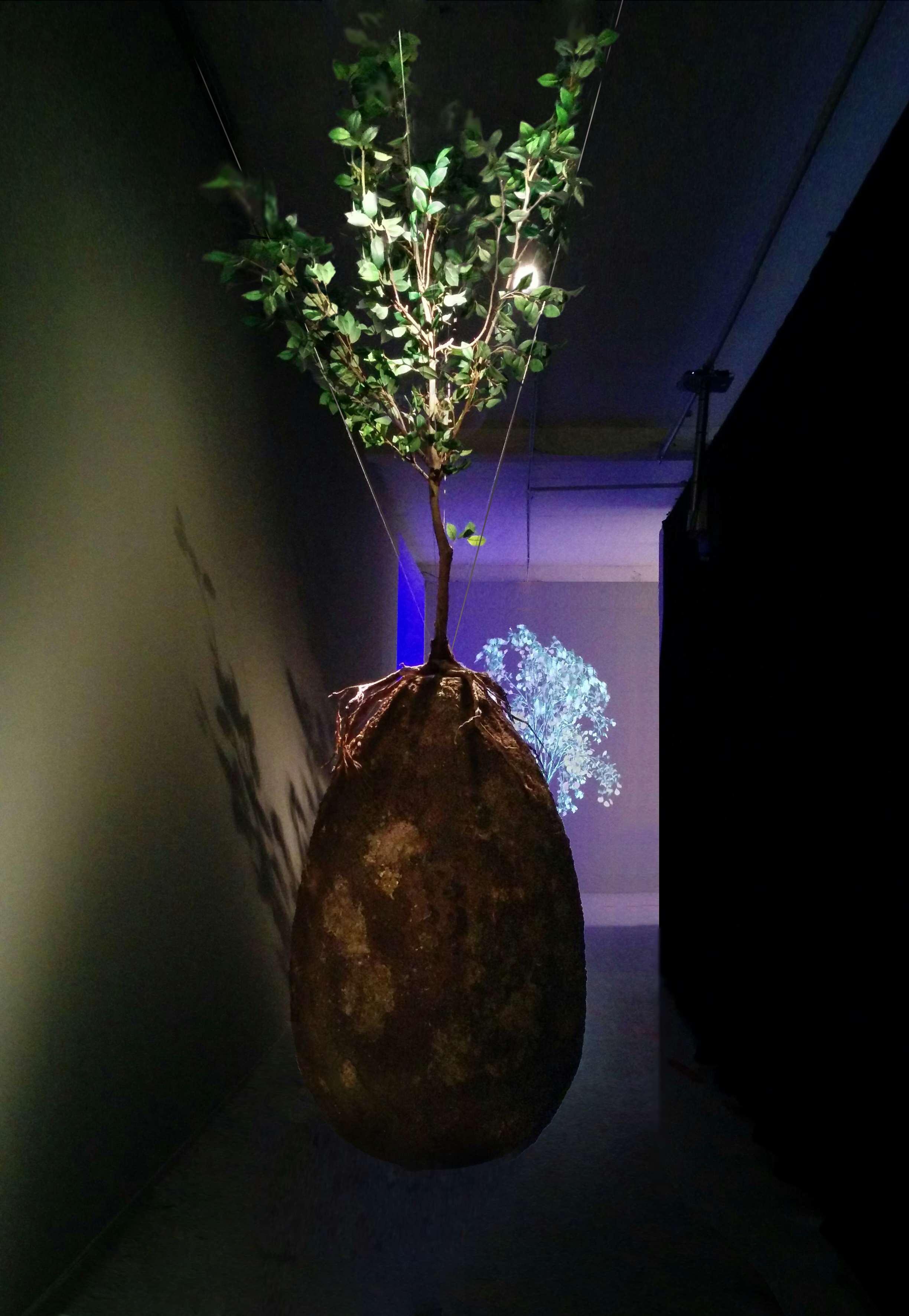 Risultati immagini per Capsula Mundi: una nuova forma di sepoltura trasforma in albero dopo la morte