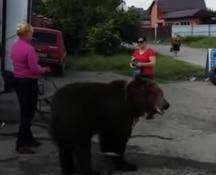 Nella Russia meridionale una donna porta un orso all'autolavaggio