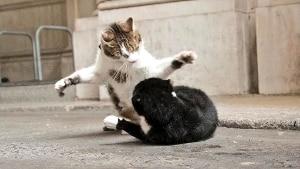 Downing Street, rissa furibonda tra il gatto della Premier e quello del … – Rai News