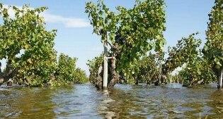 """Il maltempo in Puglia mette a rischio l'agricoltura. Allarme di Coldiretti: """"Vendemmia a rischio"""""""
