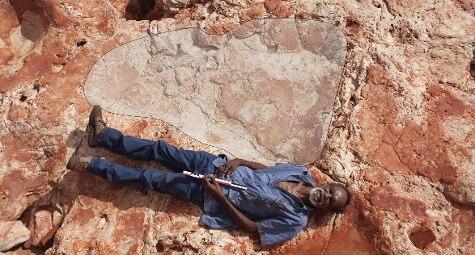 In Australia: scoperta l'orma di dinosauro più grande della storia lunga 1,75 metri (Ansa)