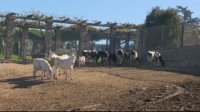 Gli animali di francesco alle porte di roma c 39 la for Porte francesi della fattoria