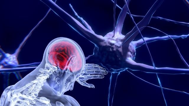 """Scienza. È nel """"claustro"""" la possibile centralina di controllo del cervello"""