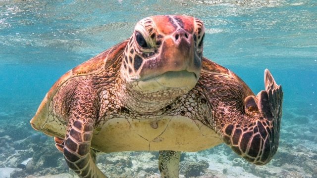 "Terry, la tartaruga che ""mostra il dito medio"" vince i Comedy Wildlife Photography Awards 2020"